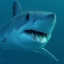 News/Novita` - Shark attack in Egypt
